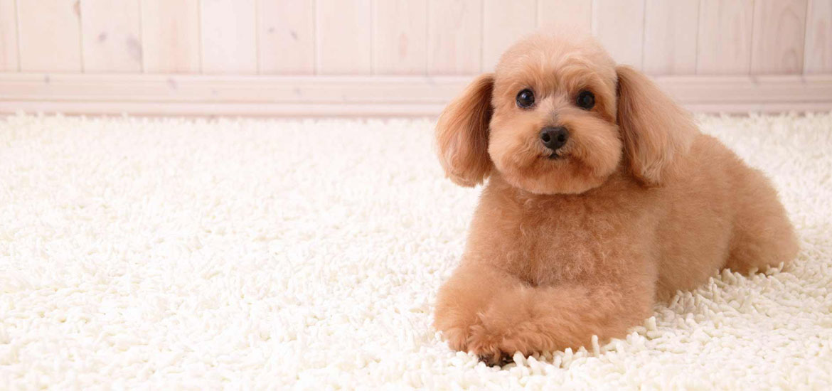 Best Flooring for Dogs - Sebring Services