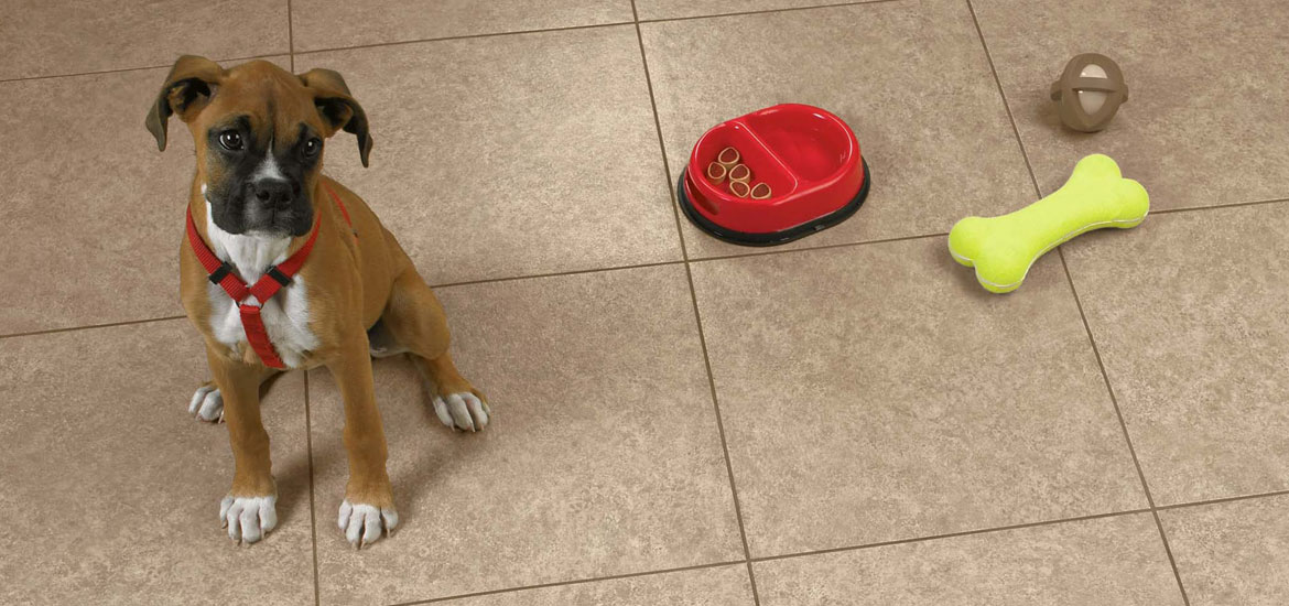 Tile for dogs tile design ideas for Dog friendly flooring ideas