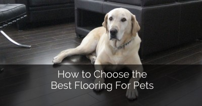 How to Choose the Best Flooring for Pets - Sebring Services