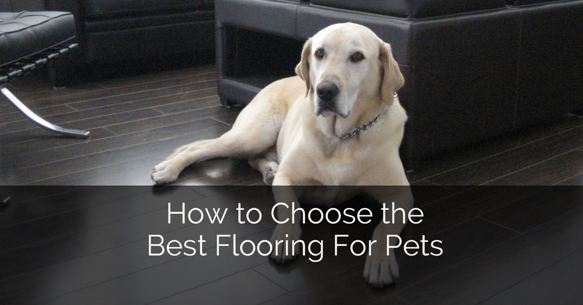 How To Choose The Best Flooring For Pets Home Remodeling