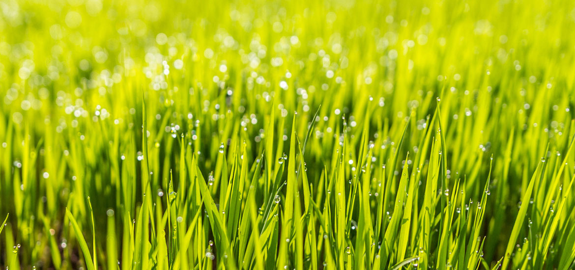 5 Easy Ways To Get Your Lawn Greener This Spring - Sebring Services