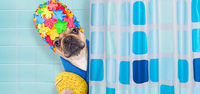 Outstanding Dog Shower Ideas & Pet Washing Stations - Sebring Design Build